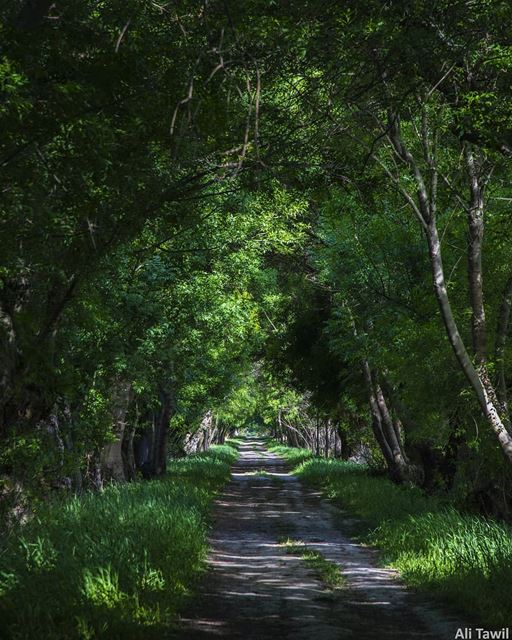 💚 nature naturephotography photography nikonnofilter instatravel ... (`Ammiq, Béqaa, Lebanon)