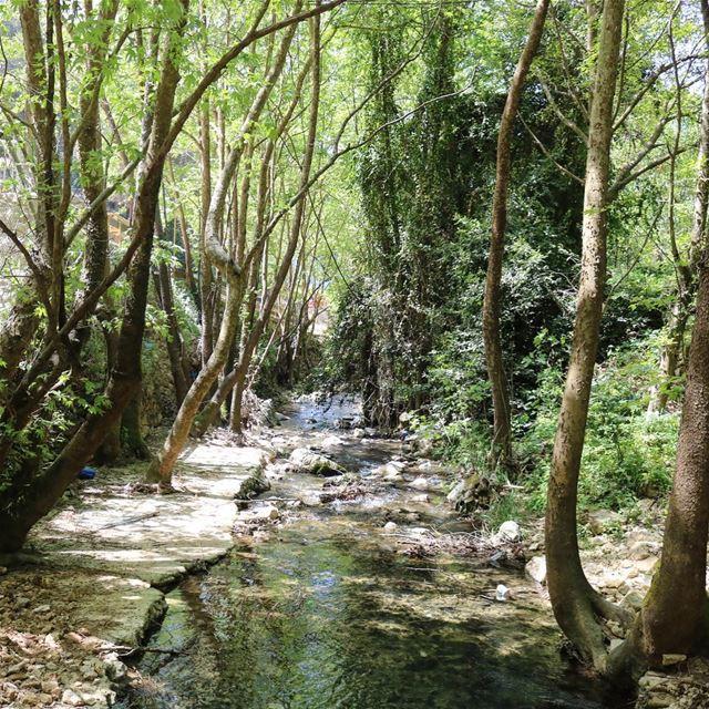 river nature naturephotography naturelover ig_photooftheday instapic... (Rechmaya)