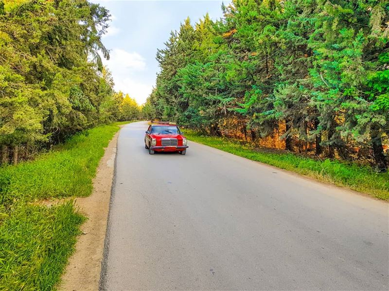 Driving through the woods. 🌲🚘🌲 (Beqaa Governorate)