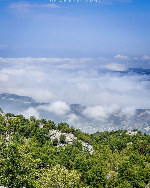 High above the clouds! Jabal Moussa natural reserve top at 1600m | 29-4-201 (Jabal Moûssi)
