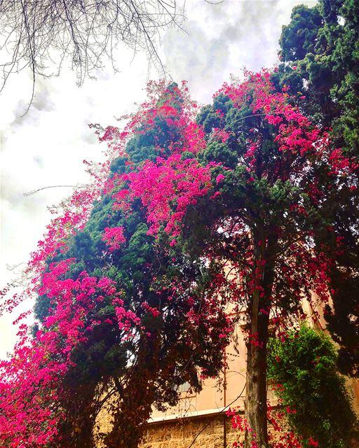 Spring in Lebanon 🌺🌺🌺 ____________________________ Lebanon Beirut ... (Achrafieh, Lebanon)