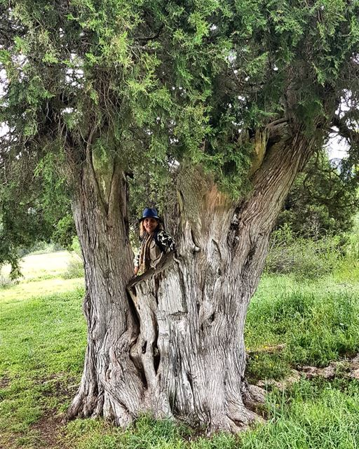 Best natural frame taken for a photo 😍, an old juniper tree (genevrier)...