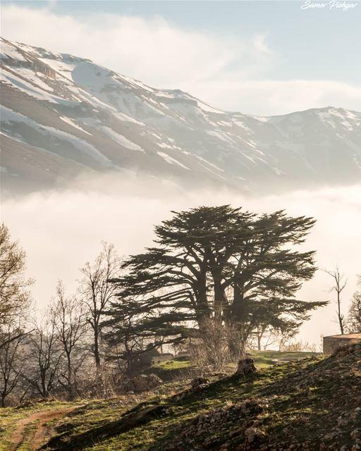 LEBANON 🔴🌲⚪The Cedars, Bcharre.... Lebanon Lebanese foggy ...