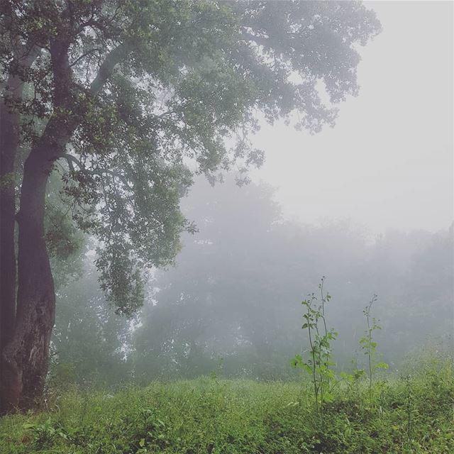 Foggy spring 🍃.. trees forest fog green hiking roadtrip ... (Dlebta, Mont-Liban, Lebanon)