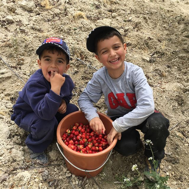Collect sweet cherry with the little boys april lebanon cherry happy boys... (Lebanon)
