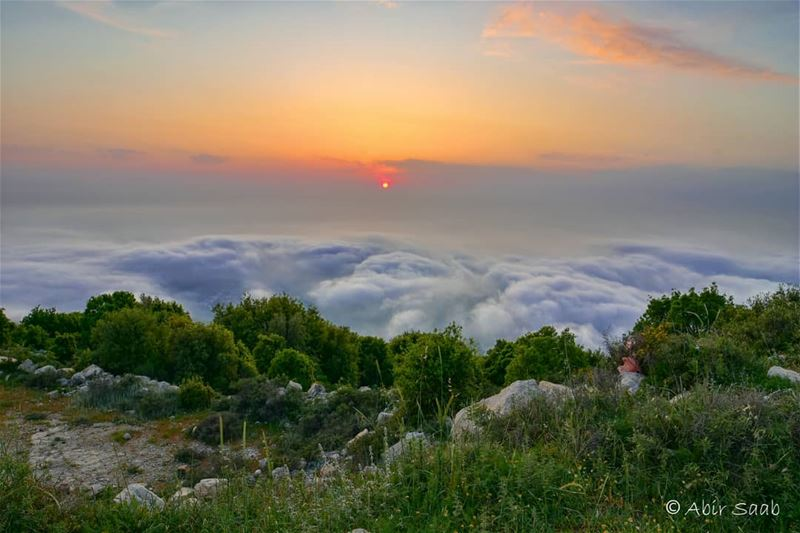 Nature speaks its own language which we can only understand when we... (El Kfour, Mont-Liban, Lebanon)