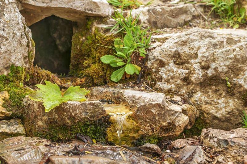 Ain El Naasa HorshEhden••• Lebanon Lebanese Nikon NikonDX Nikonlb... (Horsh Ehden Nature Reserve)