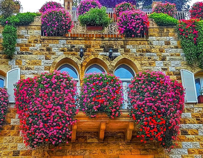 Spring in full swing  spring  flowers  beautiful  lebanonhouses  brummana ... (Brummana)
