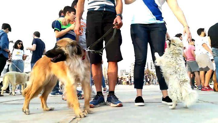 timelapse lebanontimelapse dog dogs doggy tripoli lebanon ...
