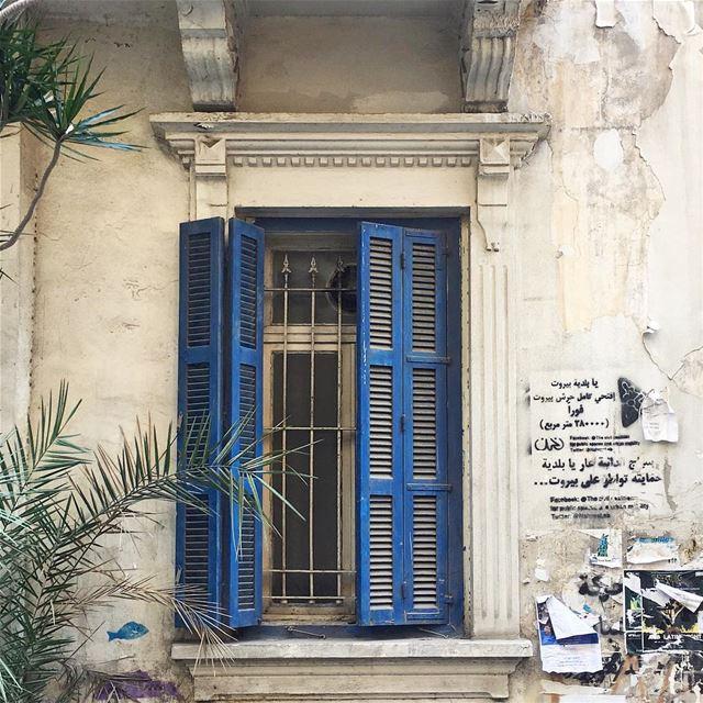 morning blues 🌿 (Beirut, Lebanon)