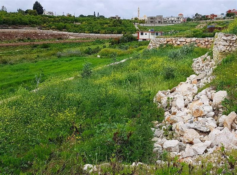 Today seems fitting for a stroll in the fields. Have a great Labor day... (Ansar, Lebanon)