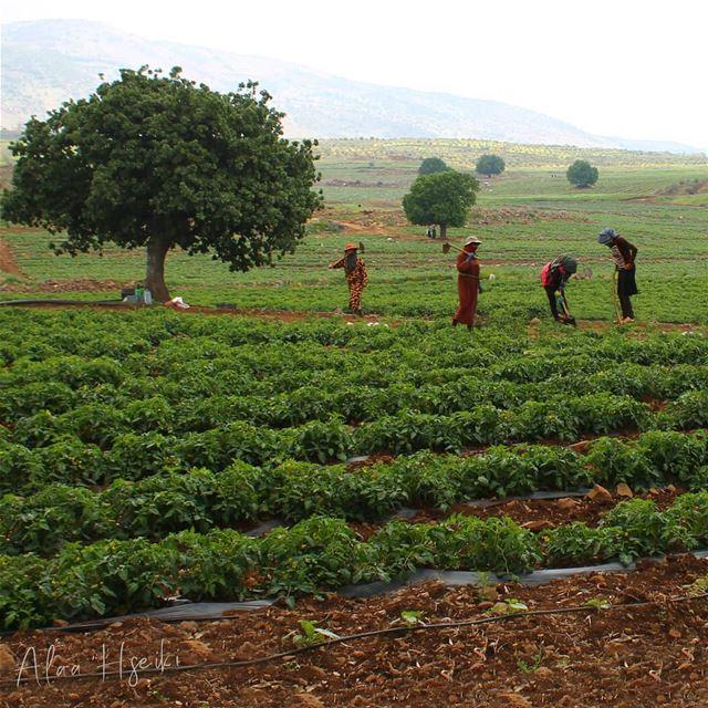 Happy Labor Day ⛑️ عيد_العمال 💪... Hseiki Lebanon livelovebeirut ... (El Méri, Al Janub, Lebanon)