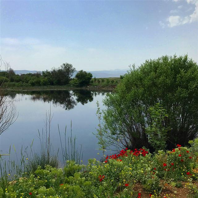 Shinrin yoku du 1 mai .... whatsuplebanon livelovelebanon nature ammiq... (`Ammiq, Béqaa, Lebanon)