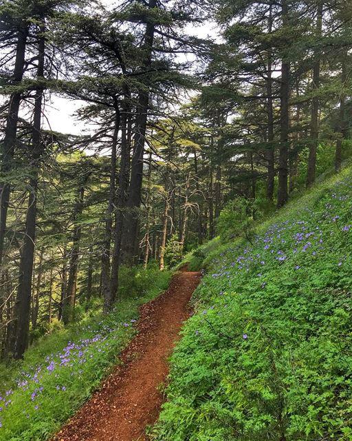 mylebanon 💜... travel nature naturelovers beautifuldestinations ... (Aïn Zhalta, Mont-Liban, Lebanon)