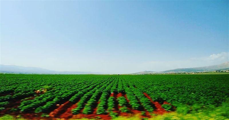 جنّات عَ مدّ النّظر :) 🌱🍀🌿... greenfields landscape bluesky lg ... (Deir el Ahmar)