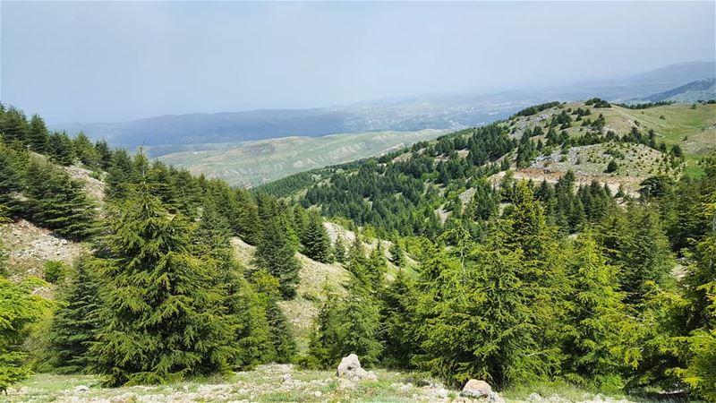 Happy hiking labour's day hiking holidays livelovelebanon lebanon ... (Bâroûk, Mont-Liban, Lebanon)