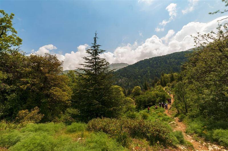 و مشينا سوا و ما وصلنا، ع نفس الطريق.. بذات المحطة تلاقينا، و ضيعنا الطريق. (Horsh Ehden Nature Reserve)