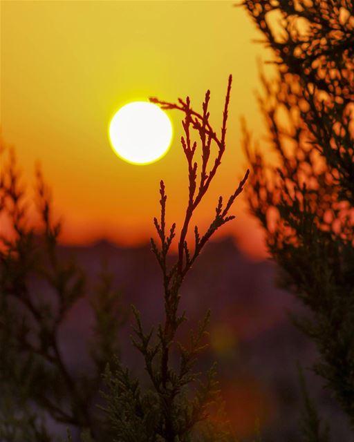 🌄🌄....... Sunrine sunshine Southern Lebanon nature landscape... (`Aynata, Al Janub, Lebanon)