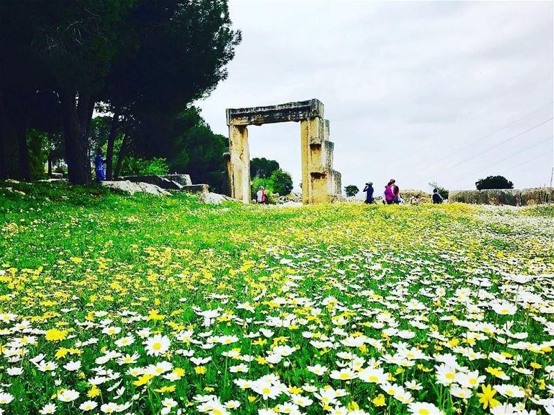 spring lebanon nature livelovelebanon instagood instagram instaglam...