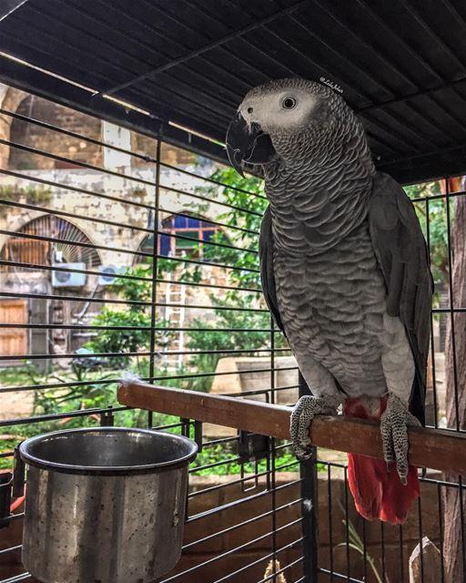 parrot livelovetripoli oldcity livelovetripoli lebanesehouse ... (Tripoli, Lebanon)