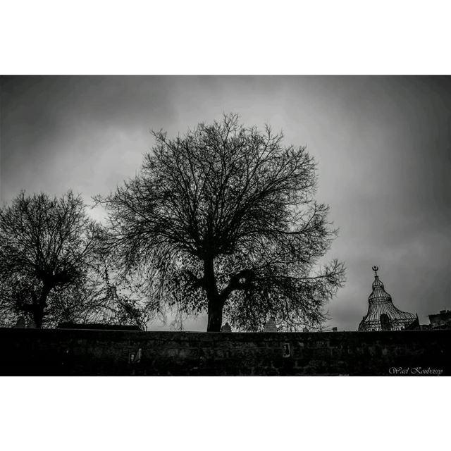بيروتيات beirut lebanon silhouette trees cemetery urban dark sky ... (Bachoura, Beyrouth, Lebanon)