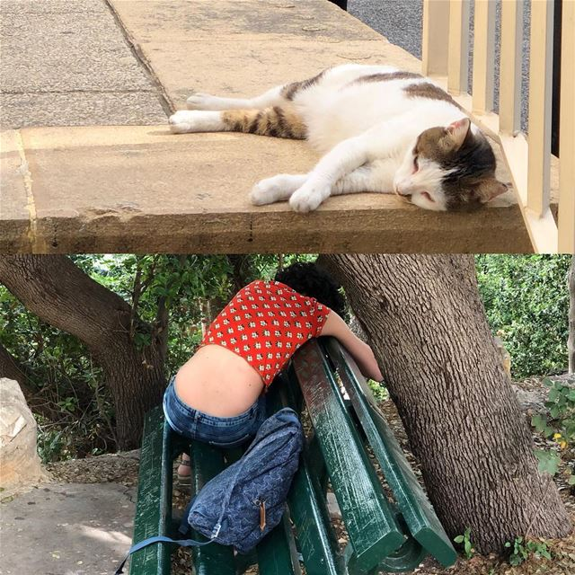 Exhaustion set in. felines felinesofinstagram humansoflebanon ...