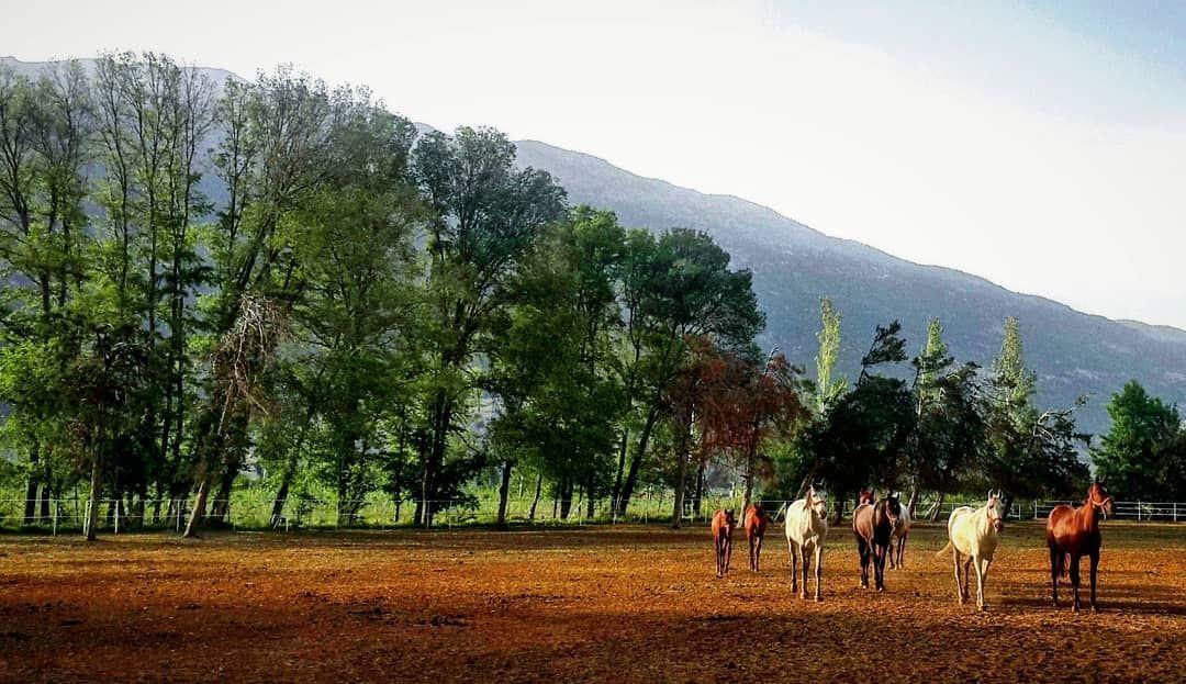 Ammik PieceOfHeaven Bekaa Lebanon 🐴🐴🌳🌳 Hiking Beautiful Nature ... (`Ammiq, Béqaa, Lebanon)