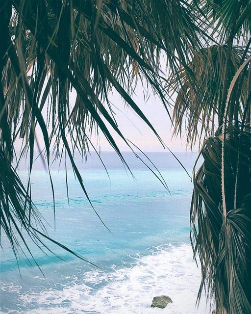 B.E.A.C.H = Best Escape Anyone Can Have 🌴🌊💙🐠 beach lebanon sea ... (Kfar Abida)