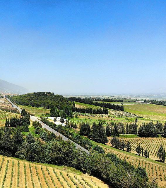 • c h a r m • luna_drone mavicair mavic drone aerialphotography ... (Château Kefraya)