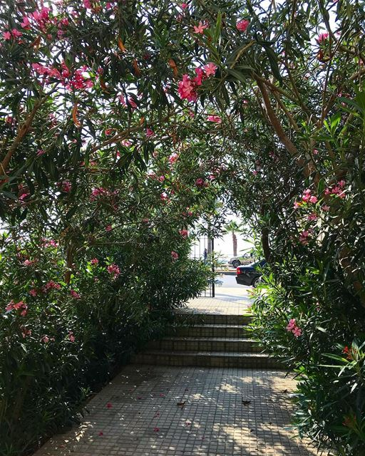 🌺🌺🌺.. instalebanon saida garden family picoftheday ... (Saïda, Al Janub, Lebanon)