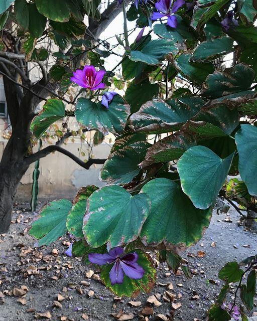 💜🌱.. picoftheday flower garden life spring... (Saïda, Al Janub, Lebanon)