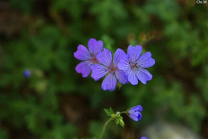 There is so much hope in a little flower. JabalMoussa unescomab unesco...