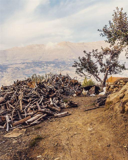 ____________________________________________________ treehugger961 ... (Lebanon)