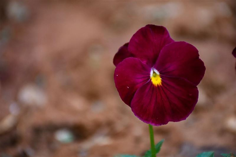 "Where Flowers Bloom, so does Hope..""Lady Bird Johnson""-📍Marjaba, Mount... (Marjaba, Mont-Liban, Lebanon)"
