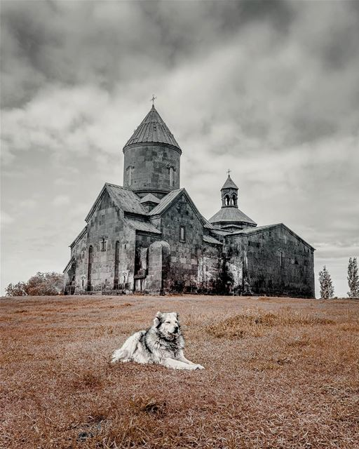 How to take photo poses 101 armenia dog nature church snapshot ... (Armenia)