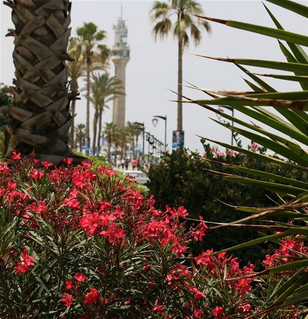 Bon Dimanche à tous et à toutes.. . Windy but sunny Sunday is here though... (Beirut, Lebanon)