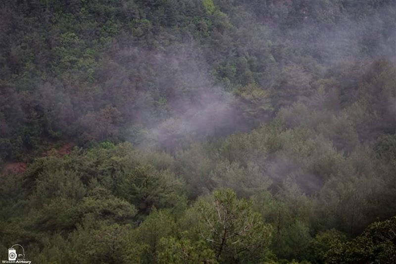pineland forest rain rainformation takenbywissamalhoury chouf... (Chouf)