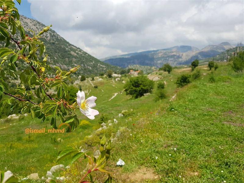 ~~☆☆ 1805131256 ☆☆~~ (Châtîne, Liban-Nord, Lebanon)