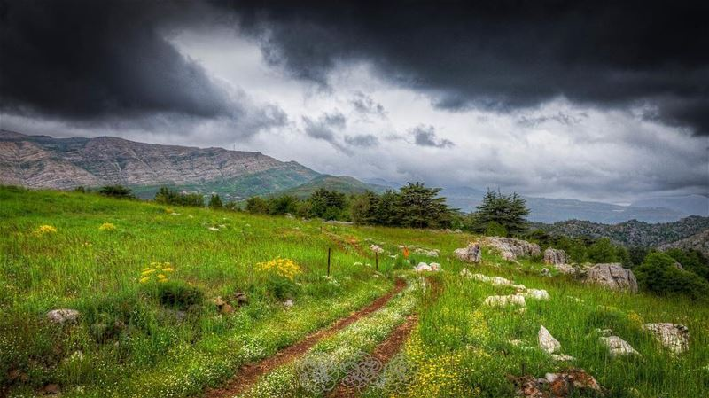 To Wherever the road might take you... Ramadan karim Globalcapture ... (Tannourine)