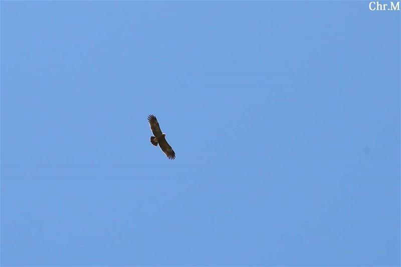 Fly Bird Fly... JabalMoussa unescomab unesco biospherereserve ...