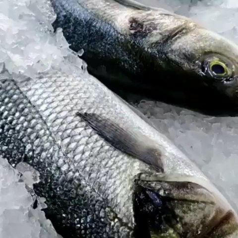 @sultanalbahrlb - No comment 😍 daleellebnen loobnan seafood sea ... (Sultan Al BAHR)