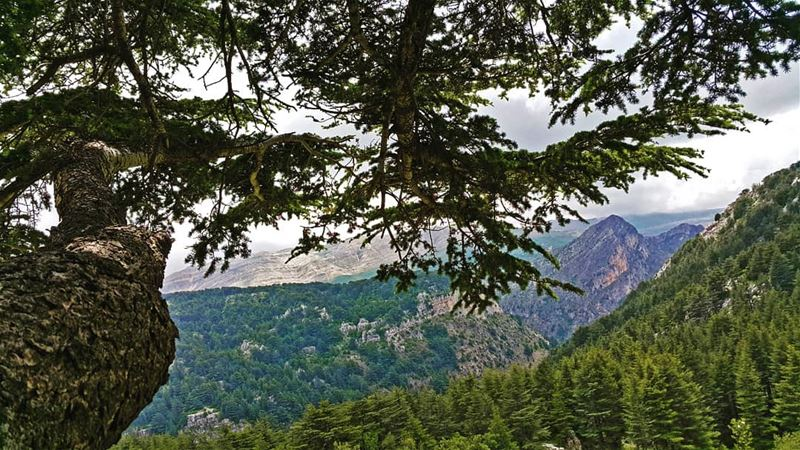 Cedars Cedars Cedars lebanon  amazing  adventure  hiking  outdoors ...
