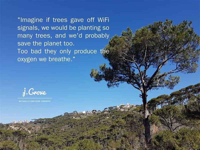 🌳 🌳 🌳 Quote jGrove LoveATree Tree Trees Green Nature ...