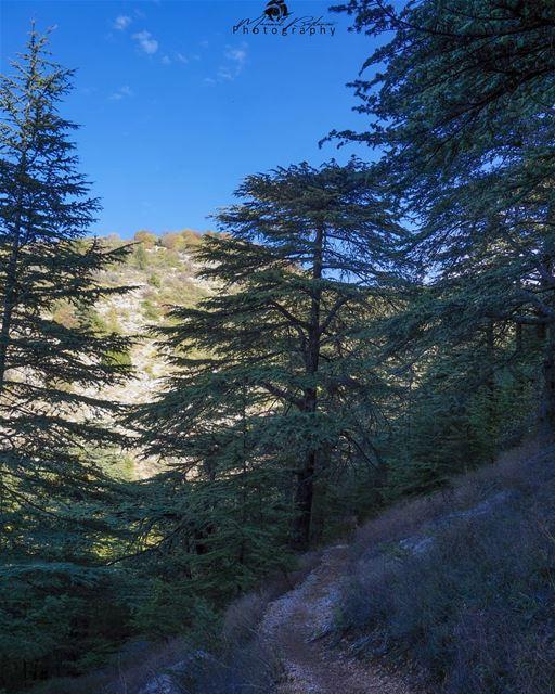 Shouf biosphere reserve • • • chouf shoufreserve lebanon beirut ...