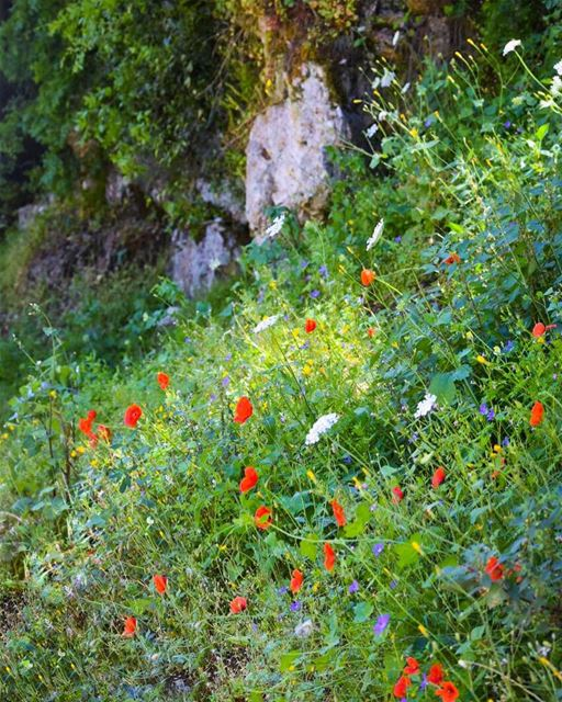 May every road you take be full of flowersReflecting the beauty of your... (Kadisha Valley)
