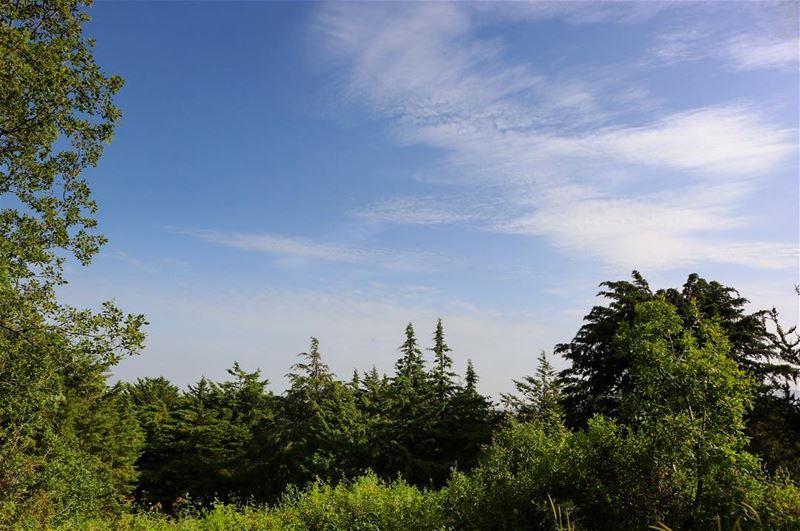 A beautiful morning! beauty nature naturephotography naturelovers ...