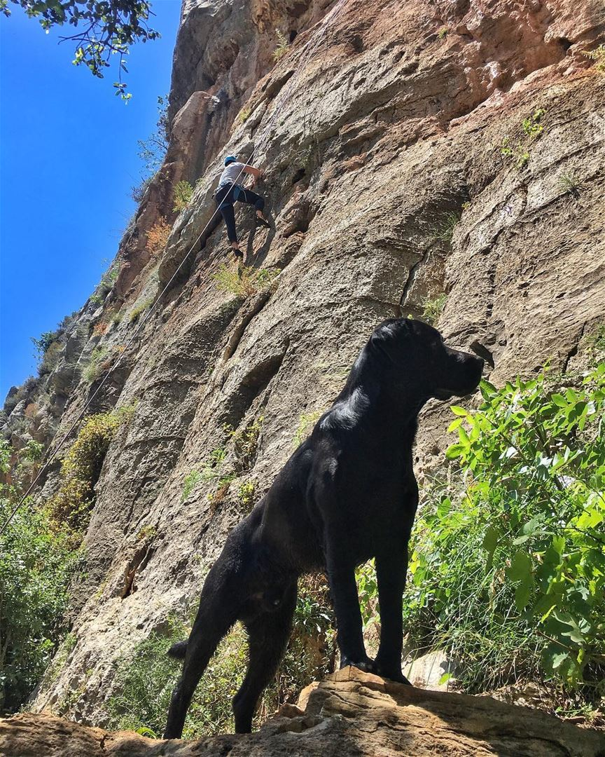 Our favorite Climbing buddy!!.... flyingfrog flyingfrogco dog ... (Tannurin At Tahta, Liban-Nord, Lebanon)