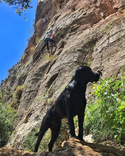 Our favorite Climbing buddy!!.... flyingfrog flyingfrogco dog ... (Tannurin At Tahta, Liban-Nord, Lebanon)