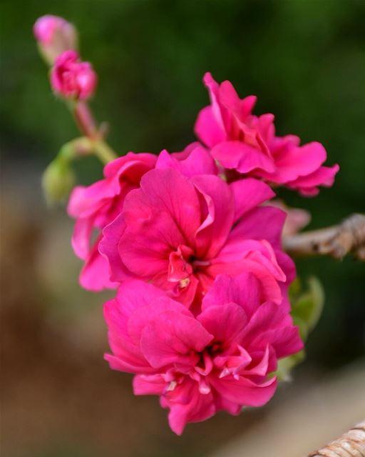 Have a Great Sunday Beautiful People 🌸 -📍Al-Maten, Mount Lebanon 🇱🇧-... (Marjaba, Mont-Liban, Lebanon)
