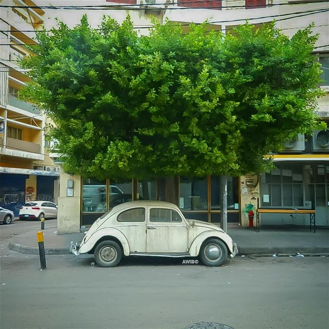 car old tree streetphotography outdoors photography photographer ...